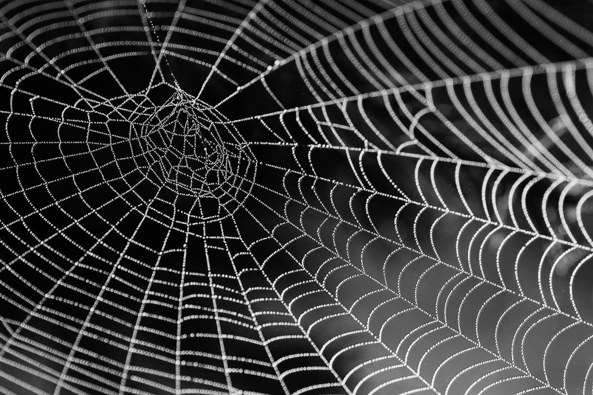 用胶带粘合伤口 科学家模仿蛛丝发明新材料