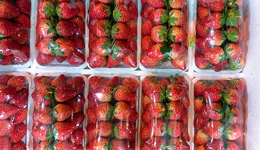 """草莓""""上新季""""到来 冷链物流打造高质量运输"""
