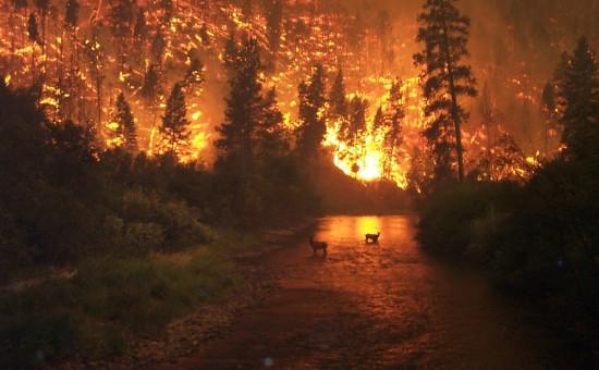 澳洲大火的背后 是大气与生态的艰难修复之路
