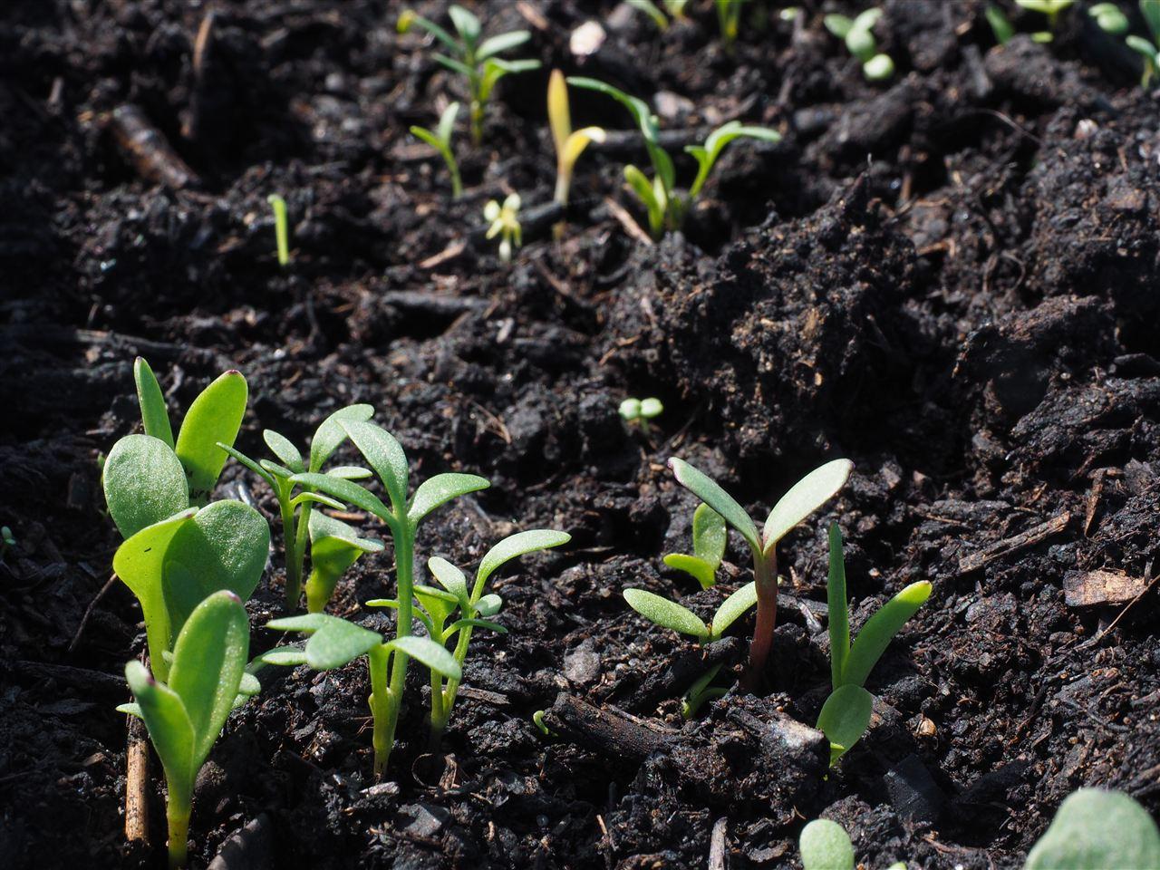 土壤治污新标准即将实施 高效液相色谱法来帮忙
